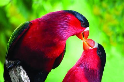 Discover some of the world's most famous birds in PNG