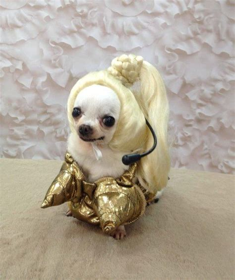 14 Costumes That Prove Chihuahuas Always Win At Halloween