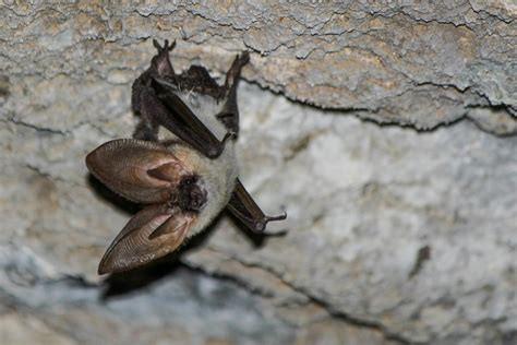 Looking for bats around Europe…