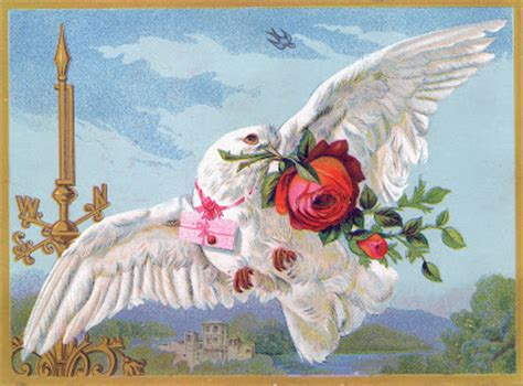 Vintage Bird Image - White Dove with Roses - The Graphics