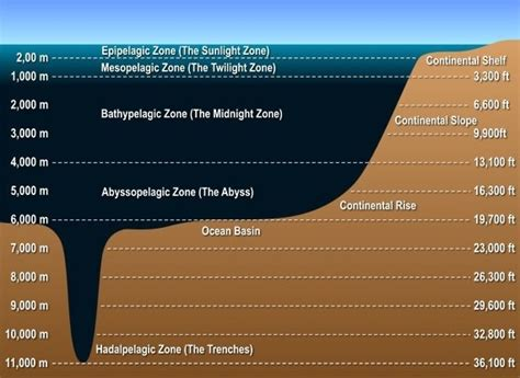 What is the deepest that humans have been under the sea